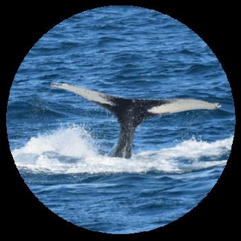 whale watchin in reykjavik